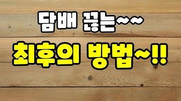 20년 하루2갑 골초가 담배끊은 방법 공개!!