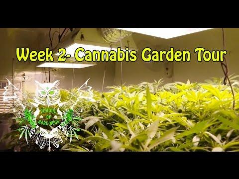 Cannabis Garden Tour - Week 2 Flower | Hydroponic Marijuana Grow Room | Weed Garden