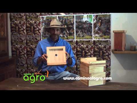 Cómo Producir Miel con Abejas Meliponas - TvAgro por Juan Gonzalo Angel de YouTube · Alta definición · Duración:  22 minutos 16 segundos  · Más de 25.000 vistas · cargado el 15.05.2015 · cargado por TvAgro