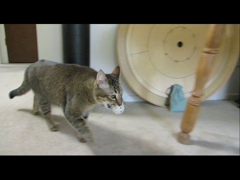 Monkey the Cat Hunts for Dinner: Part 1