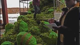 Rwanda: Reviving Tea Industry