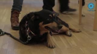 Собаки-терапевты провели урок для детей с ограниченными возможностями