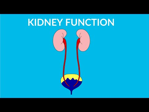 Kidney Functions in human body - video for kids - YouTube
