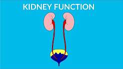hqdefault - Main Functions Of Kidney