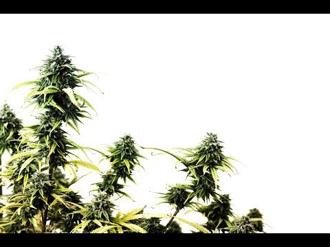 3 Pros and 3 Cons to Federal Marijuana Legalization