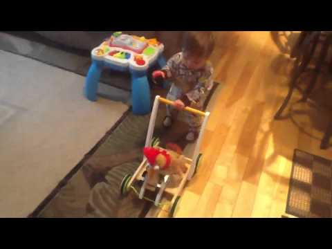 Little PW & his zebra walker playing 🐶🐒
