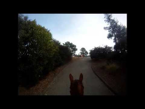 Off Leash Pit Bull Attempts to Attack Horse and Rider in EBRPD.