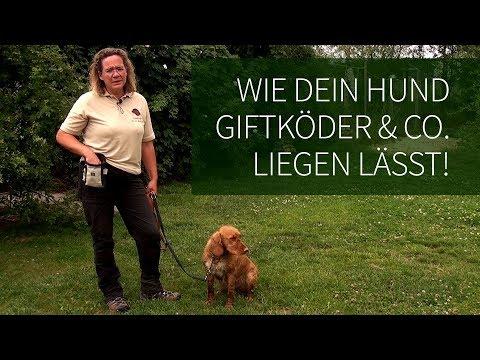 Hundetraining ► Anti Giftköder Training ► Wie Dein Hund Giftköder & Co. liegen lässt!
