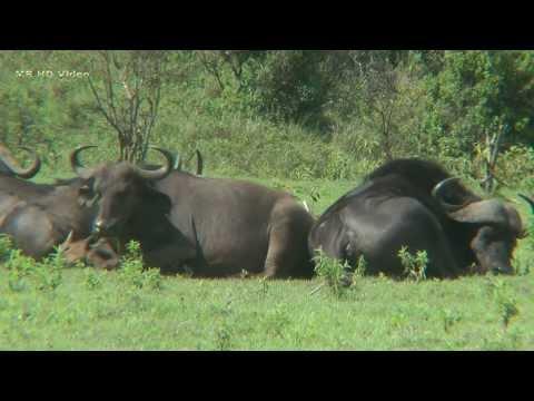 Arusha Nationalpark Teil 1/Tansania