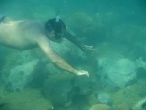Ilha da Couves Ubatuba SP - YouTube