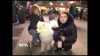 В Нью-Йорке назвали имя и породу самой лучшей собаки Америки