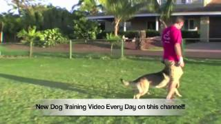 Teach Your Dog To Flip Back And Forth
