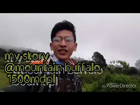 Buffalo mountain pendaki my trip my adventure