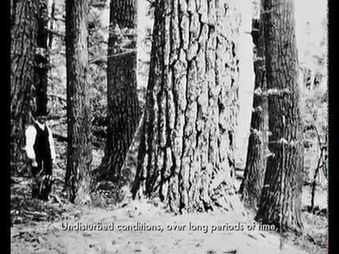 What are Old Growth Forests?