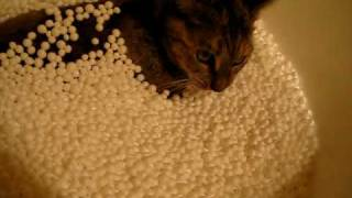 More of the cat vs the beanbag
