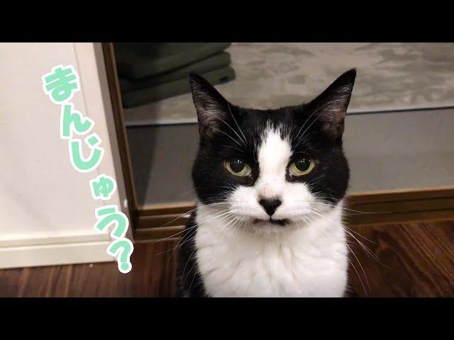 ニラ饅頭と猫おむすびさん