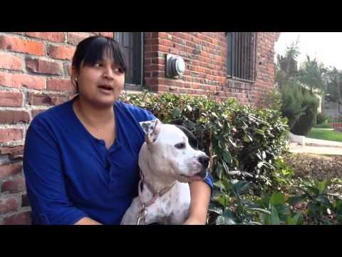 THE PREY MODEL DOG DIET EXPLAINED