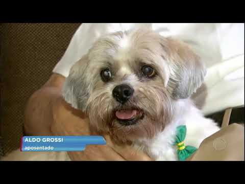 Cães idosos também podem ter Alzheimer