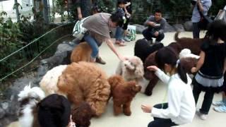 2011年10月1日「レイクウッズガーデンひめはるの里」にて.