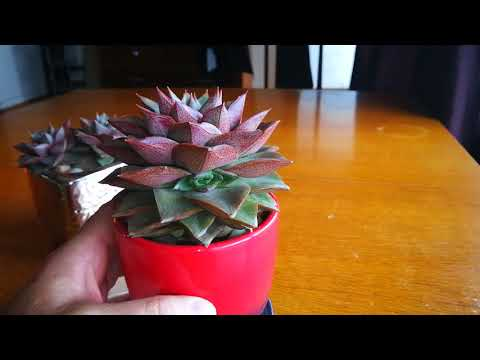 What's The Name Of My Succulent? Week 29