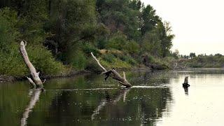ТАКОГО СО МНОЙ ЕЩЁ НЕ БЫЛО Закинул приманку в дрова а там Щука и Судак Рыбалка ШОКОЛАД