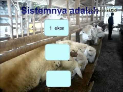 Dasyatnya Peluang Bisnis HCS, Indonesia Bisa !