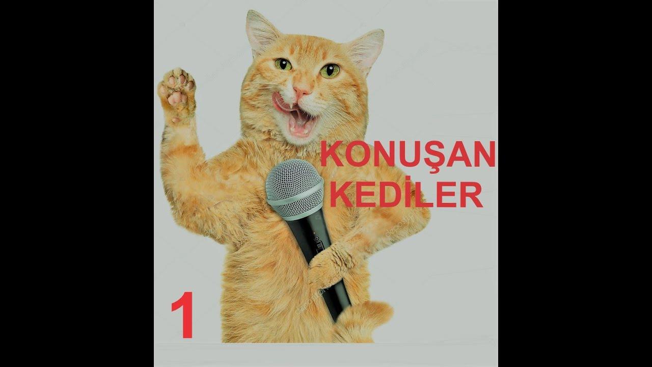 Konuşan Kediler 1 En Komik Kedi Videoları Youtube