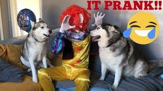 IT Clown Prank On My Huskies & Kids!! [EPIC PRANK] [TRY NOT TO LAUGH]