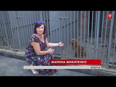 VITAtvVINN .Телеканал ВІТА новини: -Городничий- 2018-08-11 Муніципальний притулок для тварин