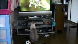 NHKの『さわやか自然百景』というテレビ番組が大好きで、毎週テーマ...