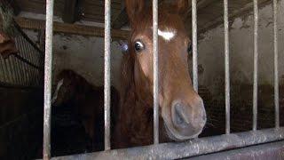 Missstände auf einem Pferdehof: Einsatz für die Tierschützer