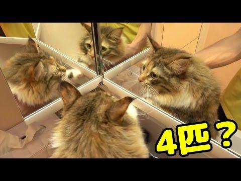 猫に「三面鏡」見せてみた