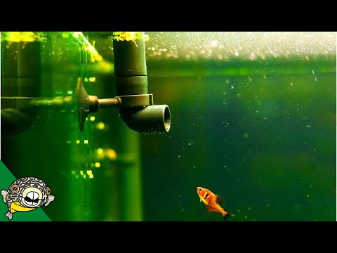 Water Movement in the Aquarium Live Stream - Aquarium Circulation Pump, Air Stones - Live Stream