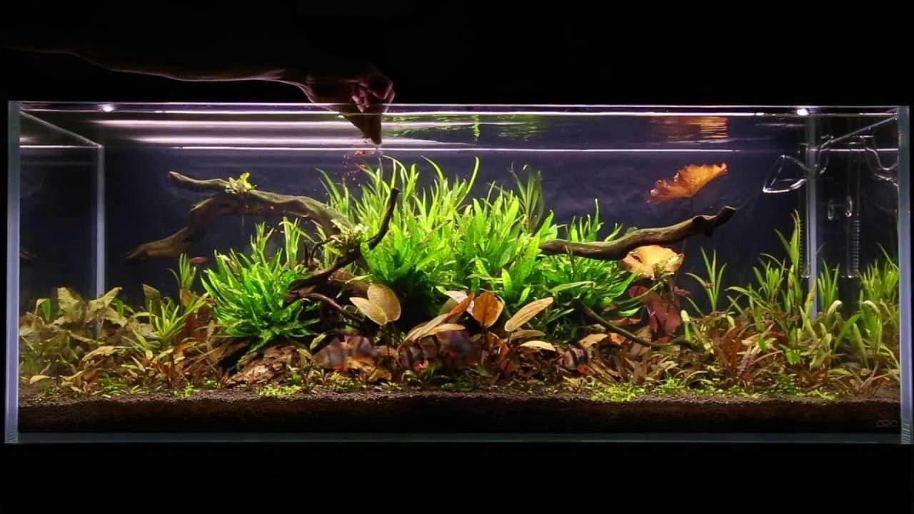 Feeding the fish in my 120cm Asian Jungle aquascape - YouTube