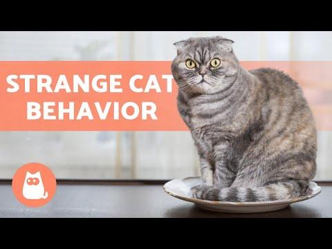 10 STRANGE CAT BEHAVIORS 🐱 Does Your Cat Do Them?