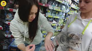 Как клеить кошке когти