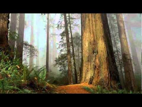 Selig - Von Ewigkeit zu Ewigkeit - HD