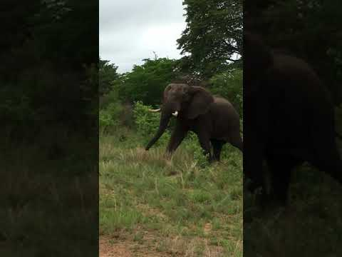 Elephant crossing, part 2, Hwange National Park