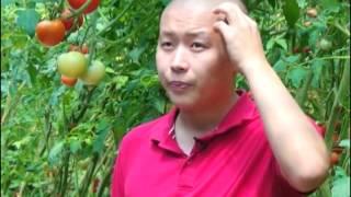 видео: МЫкты чарба  Нуризат 13 0 8 2 0 1 5 xvid mpeg2video