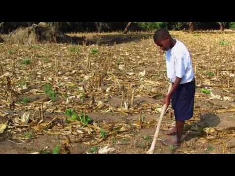 Conservation farming making waves in Tanzania