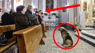 Pensaron que era gracioso ver un perro metido en la iglesia, pronto descubren la dolorosa verdad.