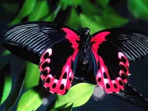 Цветы и бабочки.Удивительный мир.