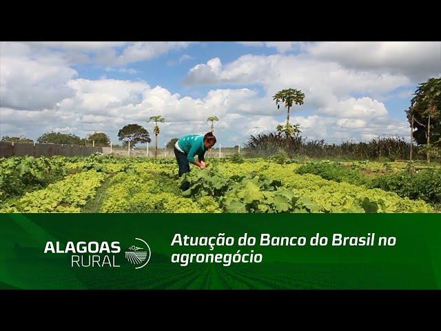 Atuação do Banco do Brasil no agronegócio em Alagoas