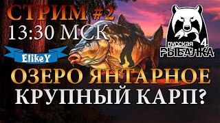 СТРИМ 2 В 13 30 МСК Озеро Янтарное Ловим Карпа Сколько Заработаем Русская Рыбалка 4