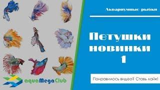Новинки 1 - Бойцовые рыбки петушки (betta) халф мун (луна)