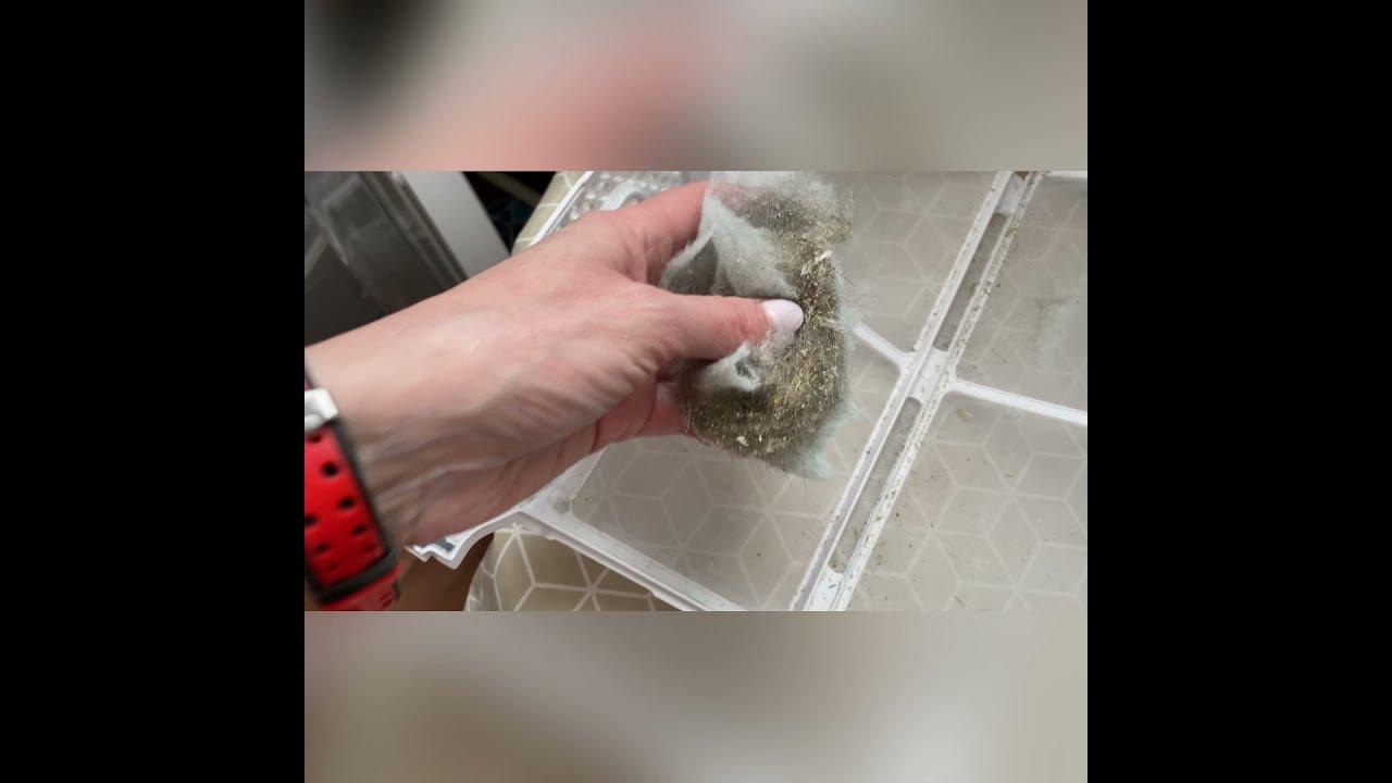 Download Сушильная машина Winia DWH-7TF4WW (на 7 кг) / против шерсти животных. Краткий обзор сушильной машины