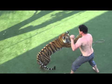 Man fight tiger !