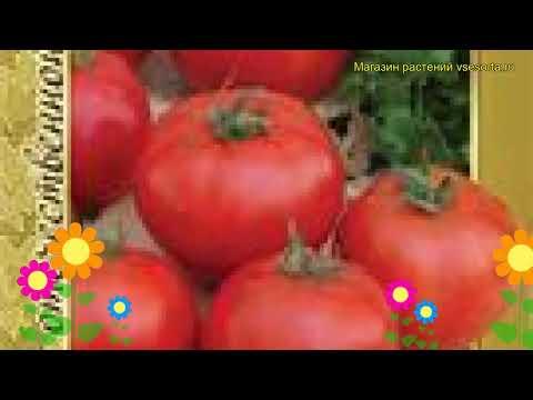 Томат обыкновенный Дубрава. Краткий обзор, описание характеристик, где купить семена Dubrava