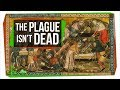 Could the Plague Rise Again?
