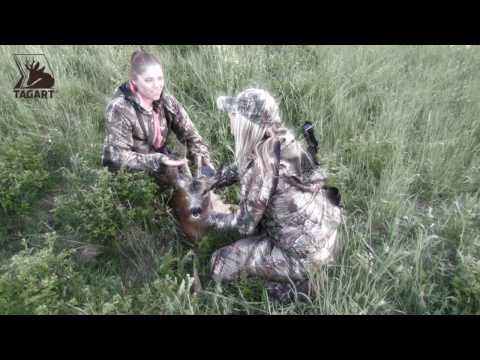Roe Deer Hunting Czech Republic